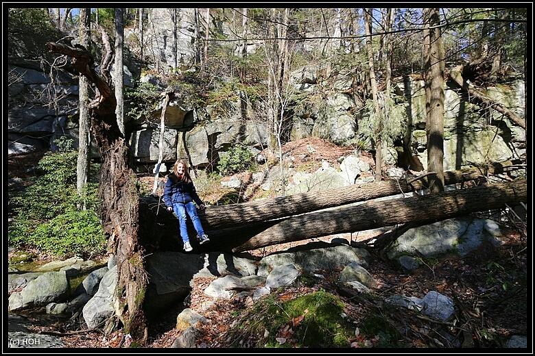 Kleine Turnübung auf großen Bäumen