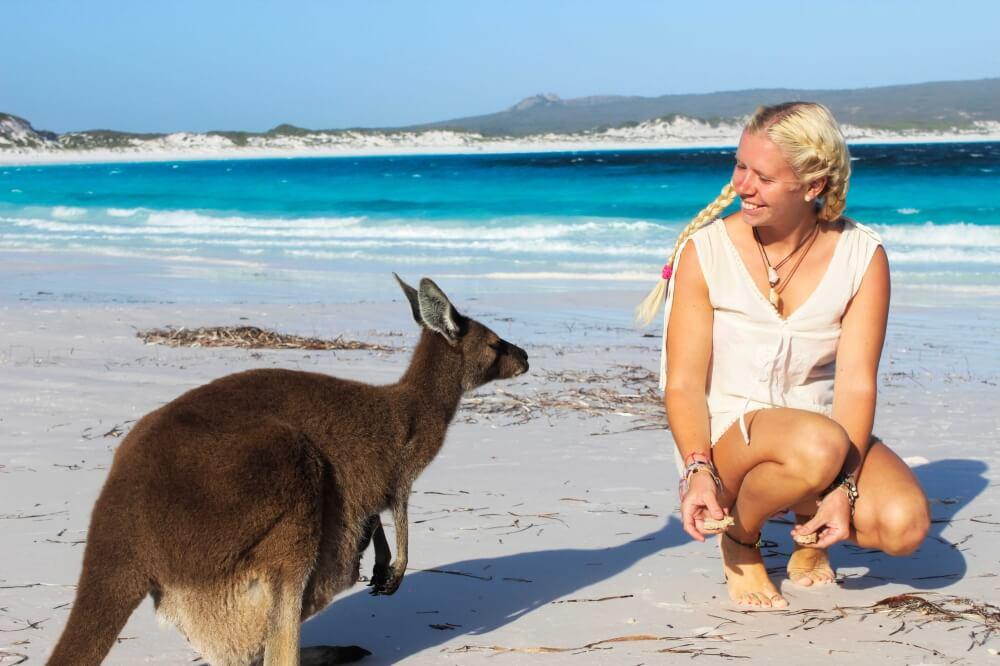 Känguru am Strand in Lucky Bay, Australien
