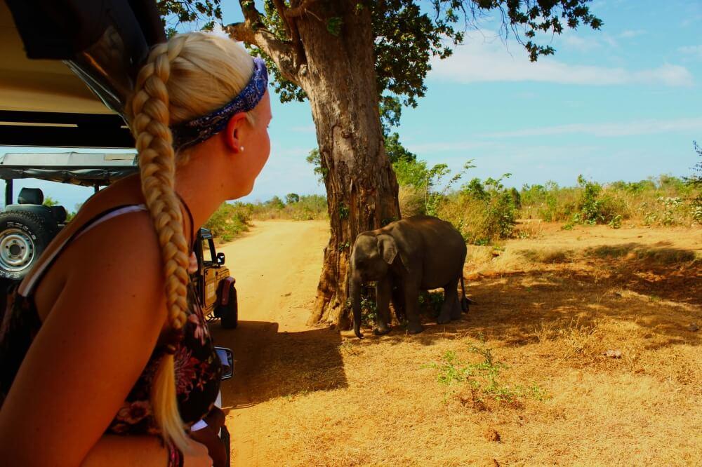 Auf Elefanten Safari im Udawalawe Nationalpark, Sri Lanka