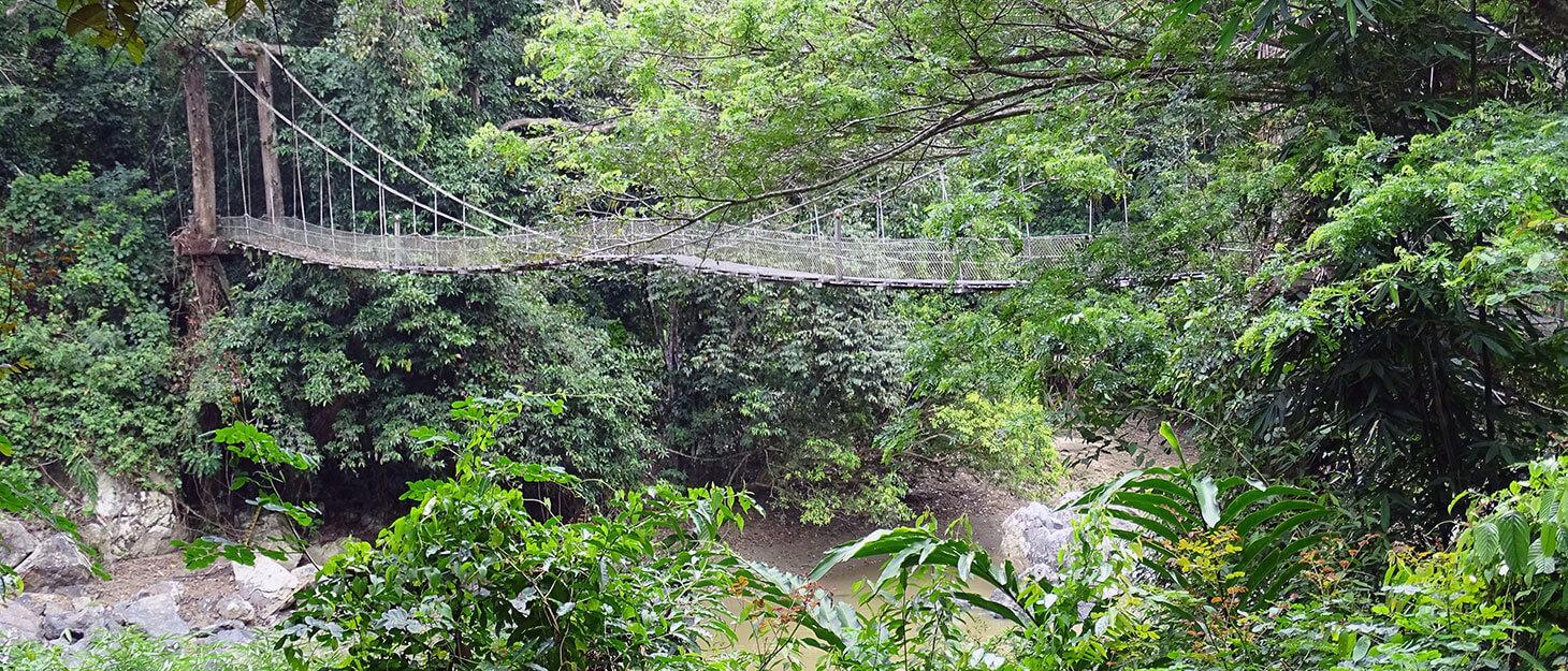 Von Dschungel kann ich nie genug bekommen. Ich war schon im Regenwald von Costa Rica, Peru, Bolivien, Thailand und Borneo. Am besten hat es mir bisher im Danum Valley gefallen – vielleicht weil der Regenwald in Borneo einer der bedrohtesten der Erde ist?