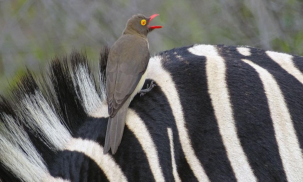 In Südafrika auf Safari haben wir auch die Big Five gesehen. Aber viel spannender fand ich die vielen kleinen Tiere, die auf der Suche nach Löwe, Elefant, Nashorn & Co. oft gar nicht beachtet werden.