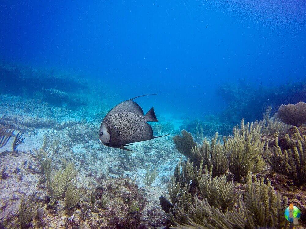 Auch dieses Bild ist in Mexiko entstanden und war mehr ein Glückstreffer. Deshalb ist es wohl auch eins meiner Liebsten. Das Riff hat mich beim Tauchen einfach fasziniert.