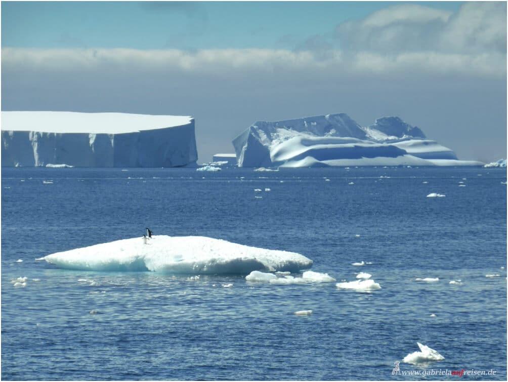 Antarktis: Eisberge mit Pinguinen, ungezähmte Natur