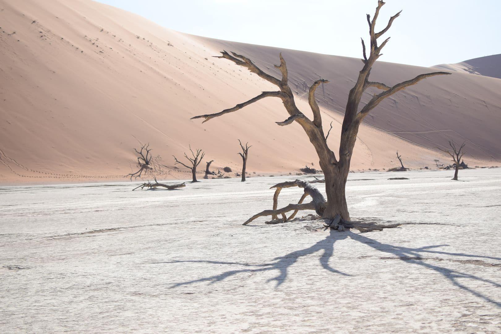 In Namibia hat uns die weite Landschaft und die Tierwelt sehr fasziniert. Die toten Bäume im Dead Vlei,