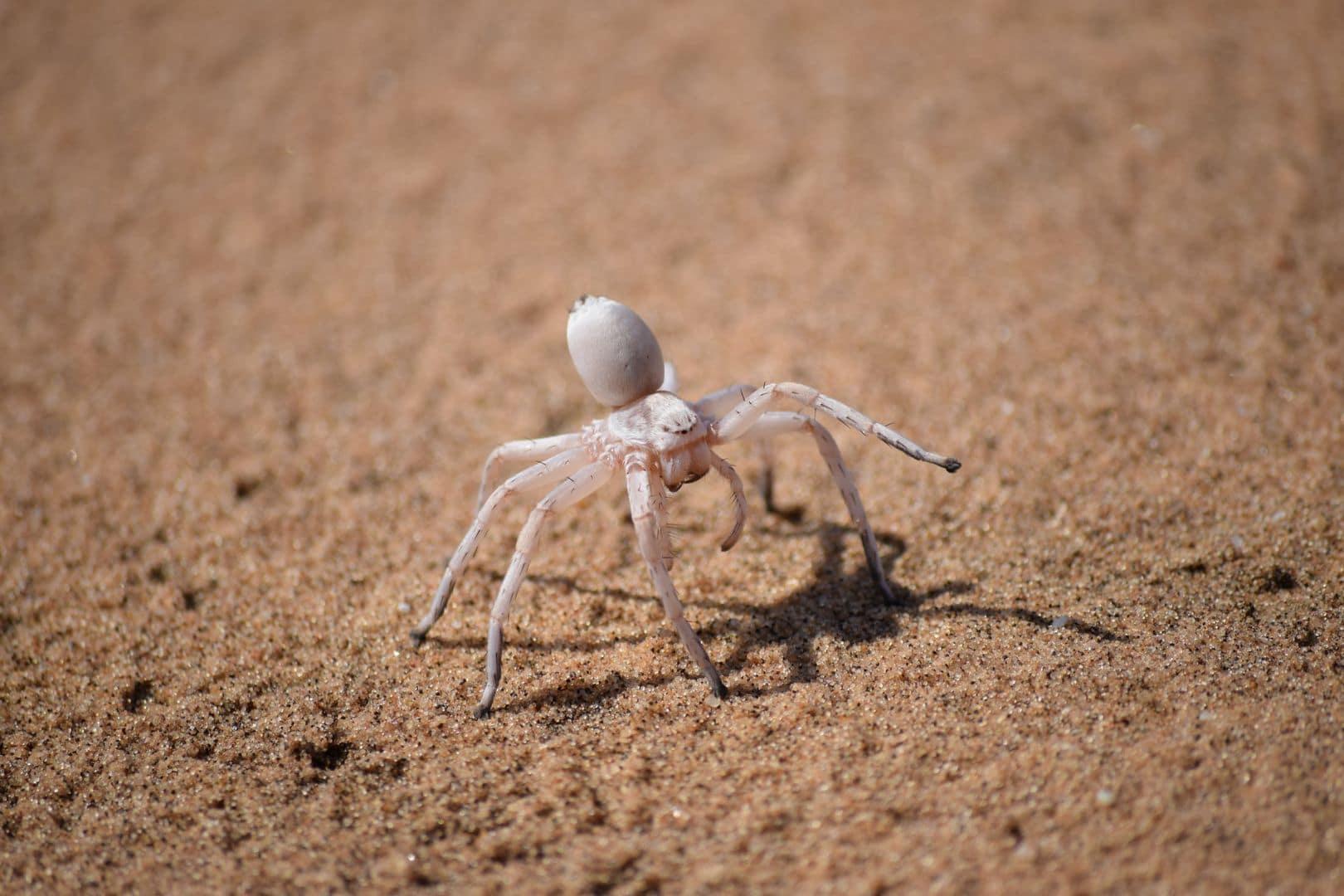 Tiere, vor denen ich normaler Weise das Weite suche sind Spinnen. Hier hatten wir die Gelegenheit die White Dancing Lady zu sehen. Zu meiner Angst hat sich jetzt wenigstens auch ein bisschen Respekt, Neugierde und Faszination für diese Tiere gesellt.