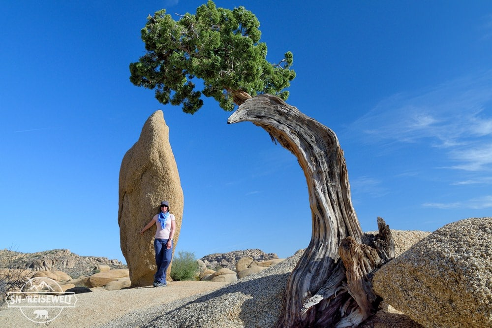 Joshua-Tree-Nationalpark USA.