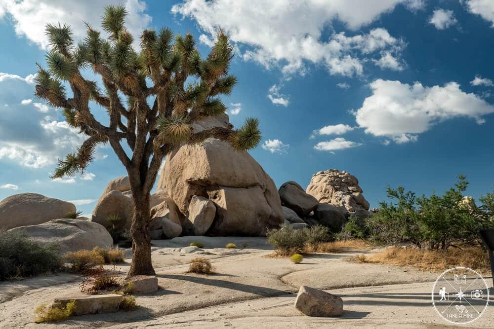 Das Foto was für MICH persönlich den Joshua Tree NP am besten beschreibt. Einfach wunderschön.