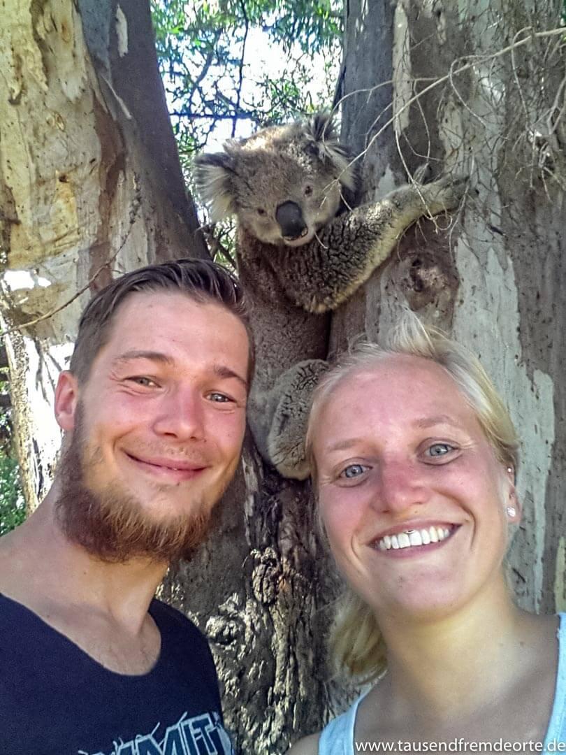 Unser Handyselfie 2015 auf Raymond Island (Victoria) mit dem Koala im Hintergrund. Die Insel war 2015 noch weitestgehend unbekannt und so kam es, dass wir fast allein mit den Koalas auf der Insel waren.