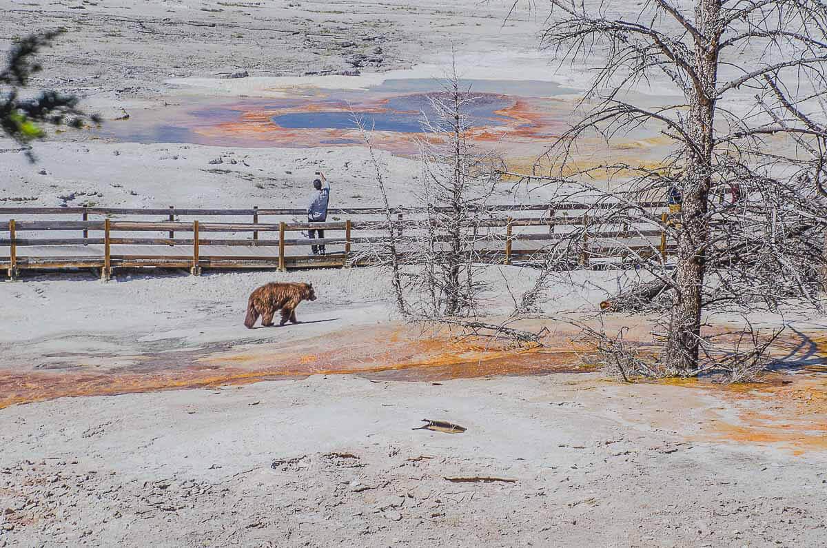 Mein Lieblingsbild aus dem Yellowstone Nationalpark - ein absoluter Zufallstreffer
