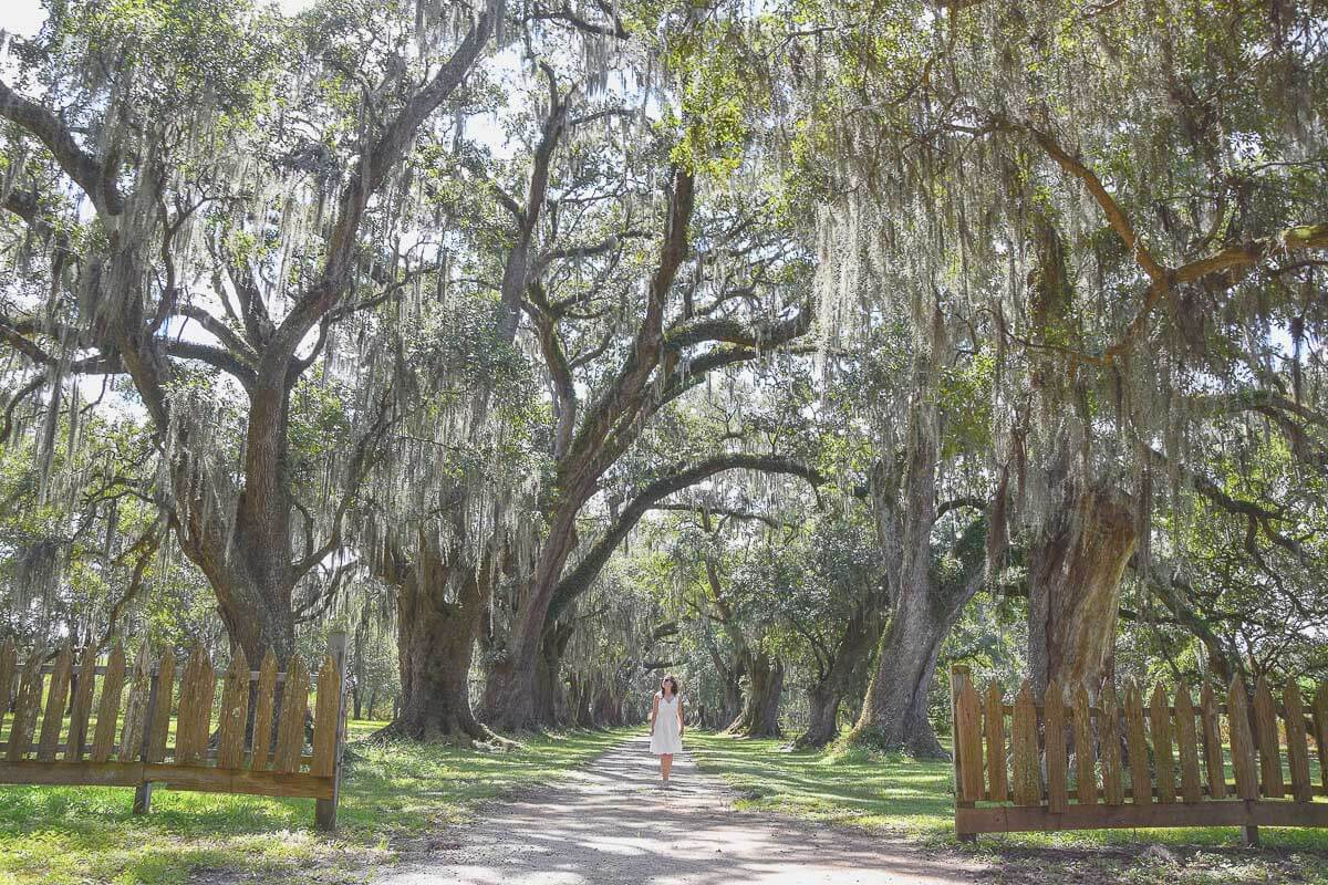 Evergreen Plantation in Louisiana - diese typischen Südstaaten-Eichenalleen haben etwas Magisches