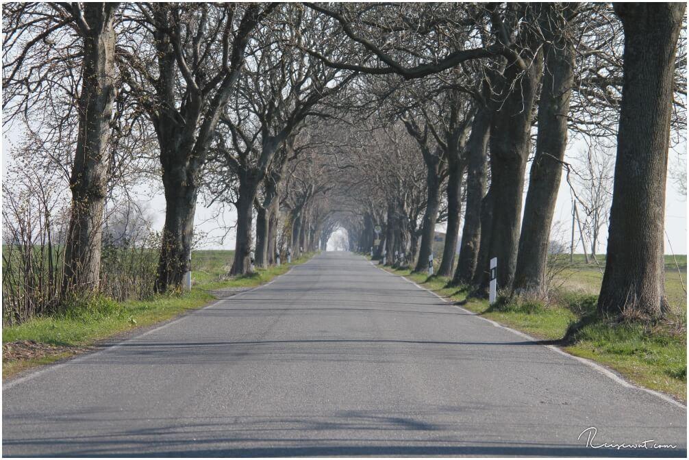 Alleestraße auf Rügen