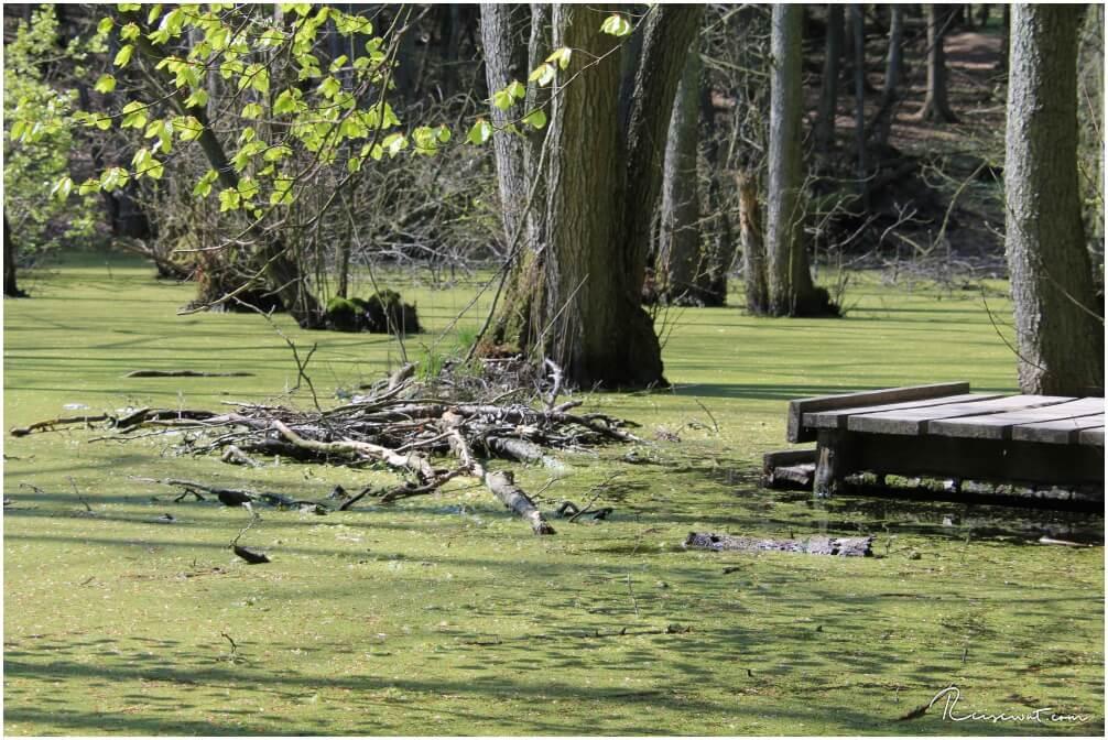 Der Moorsee auf Rügen hat fototechnisch einiges zu bieten