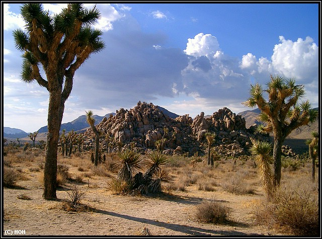 Im Joshua Tree National Park