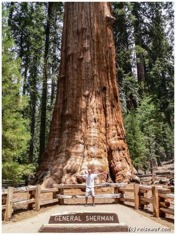 Der General Sherman Tree ist einfach nur unfassbar