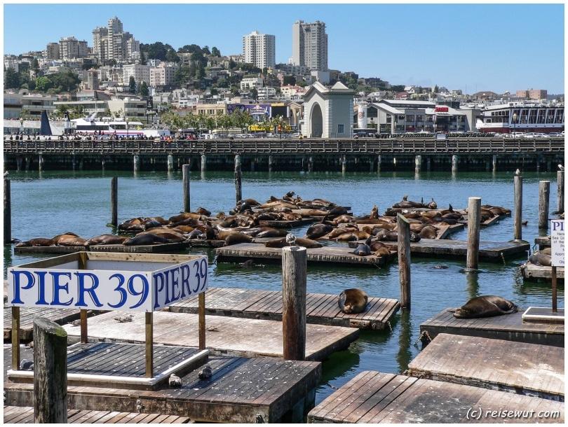 Pier 39 mit seinen Seehunden