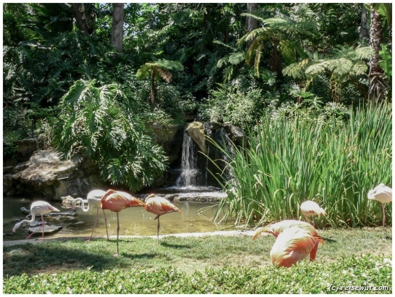 Los Angeles Zoo Flamingos