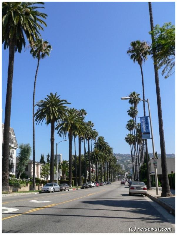 Mit Palmen gesäumte Allee