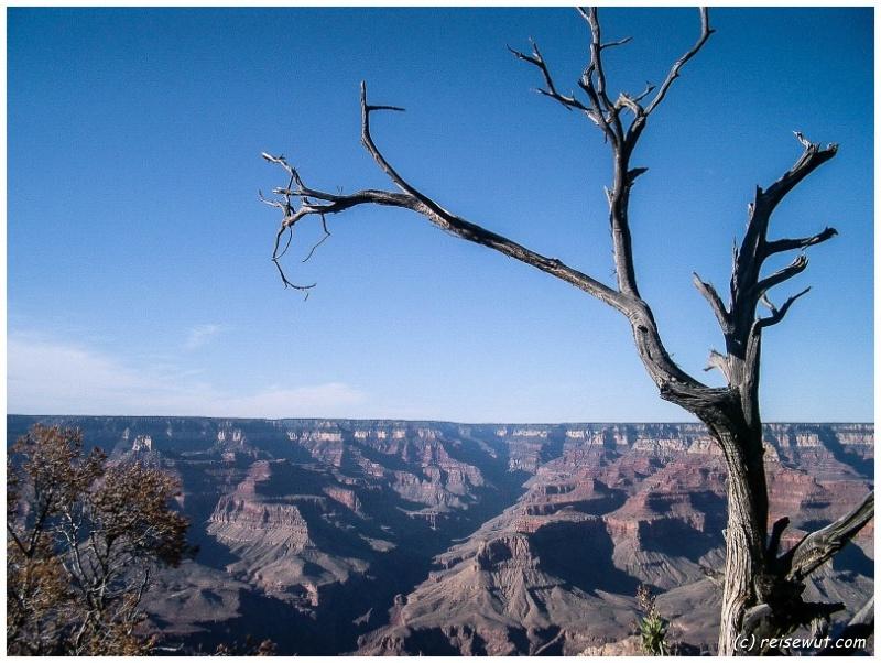 Grand Canyon ... und ein toter Baum