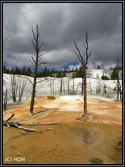 Upper Terrace Area, Mammoth Hot Springs