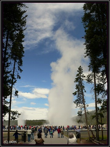 Old Faithful Ausbruch im Yellowstone NP