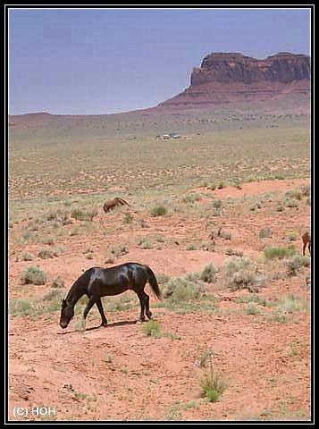 Pferde im Monument Valley