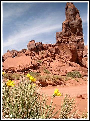Blumen im Monument Valley