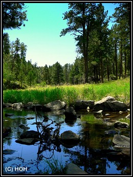Custer State Park Impression